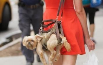 El Diario Noticias: Último 'ladrido' de la moda: bolsos para llevar perros