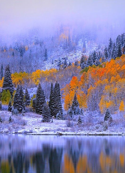 The end of Autumn, Winter has arrived. This photo is awsome! I feel the cold moist air & My eyes are drawn through the landscape and reflectiong. The Colors !!!