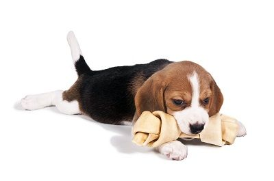 Beagle Characteristics Beagles are brave, intelligent, and social dogs that are good with children and known for their loving, tolerant, sweet, and gentle temperament. The breed do