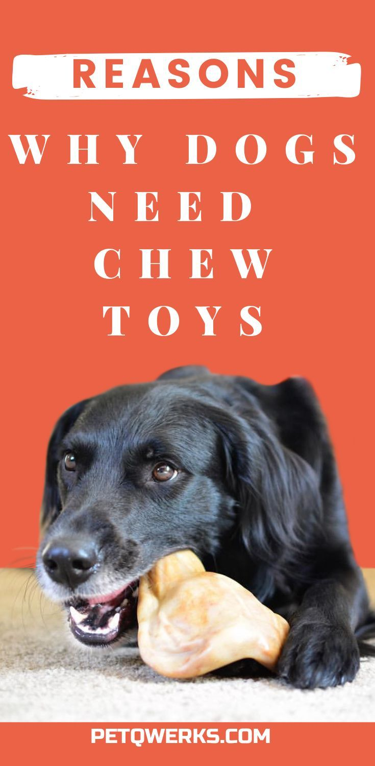Reasons Dogs Need Chew Toys Dogs Dog Chew Bones Dog Chews