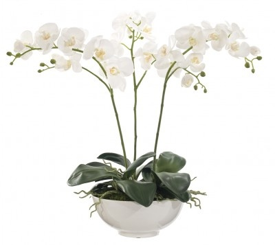 Phalo orchid in bowl