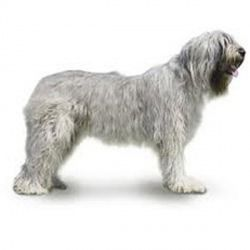 Il cane da pastore della Russia Meridionale è un cane di taglia grande, affettuoso e molto intelligente tanto da essere considerato uno dei cani da pastore più affidabili.