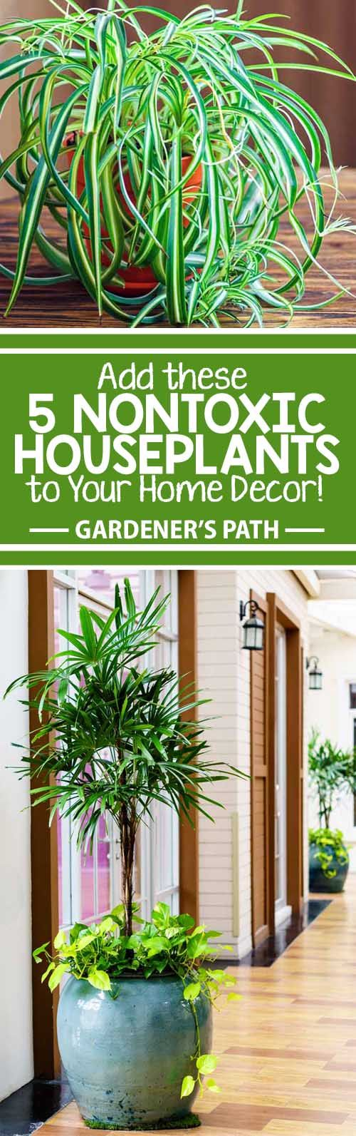 Want to spruce up your indoor decor? Houseplants are the way to go! Enhance living spaces with pet-safe varieties that are easy to maintain – and that may help to eliminate airborne toxins. Discover five potted beauties that are sure to refresh your surroundings – read more now on Gardener's Path.