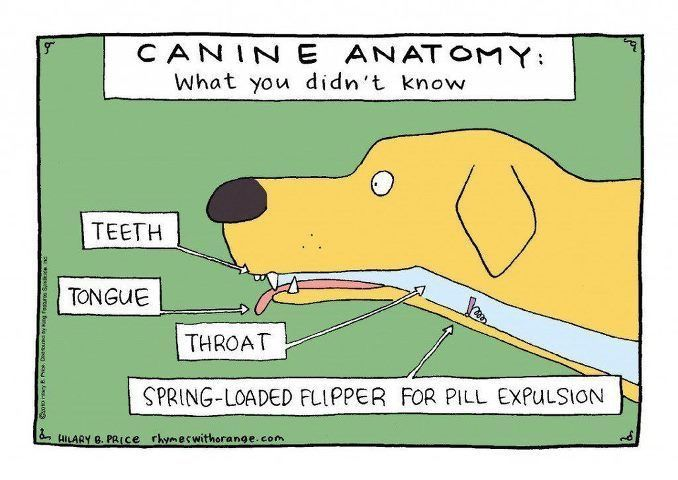 Canine Anatomy Veterinary Memes Vet Tech Humor Veterinary Humor