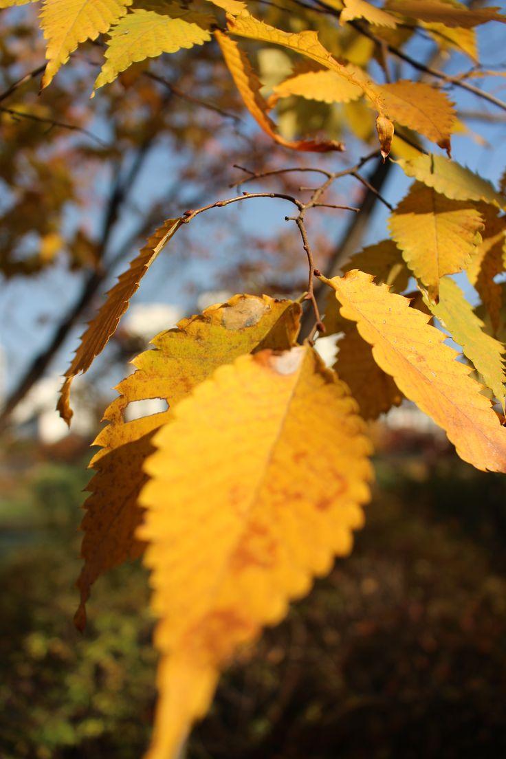 Autumn 2014 #6