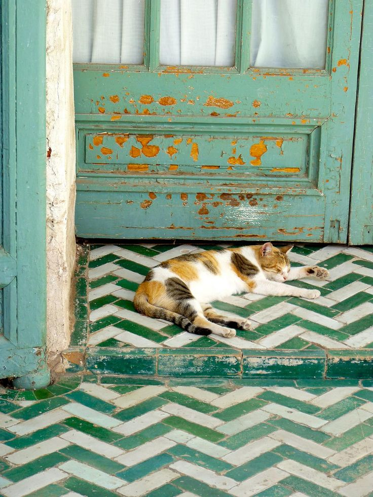 love so much about this one. the colours. The fact that the random splotches of the cat are reflected in the same colour on the door. the blues and greensa re all man made design and shape the ochre is random chaotic nature.