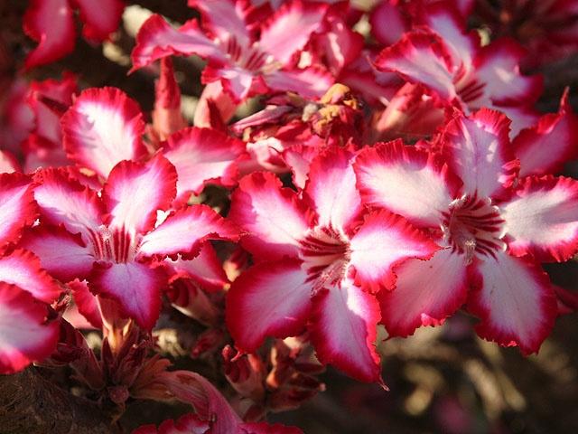 Flower Garden Ideas In Michigan 38 best propagating plants images on pinterest | gardening, plants