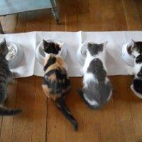 #dogalize Cibo per gatti fatto in casa, cosa preparare? #dogs #cats #pets