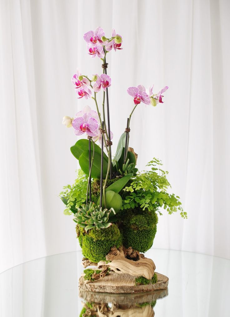 Gorgeous display of novelty orchid plants with moss, succulents and maiden hair fern $175.00