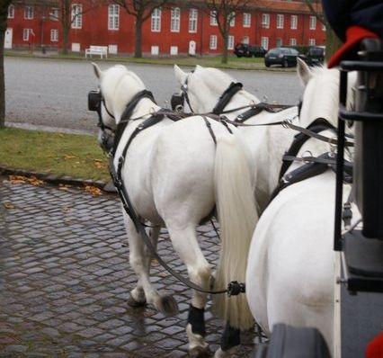 Castle and Palace 2 Day Tour - Studniska Horse Centrum