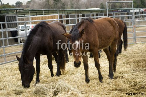 Cavalli creata da Morgan