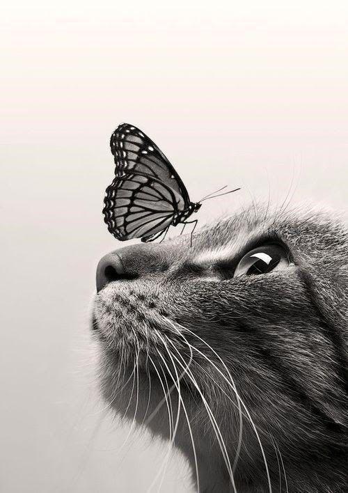 Schwarze und weiße Katze mit Schmetterling auf Nase Stoff Block – ideal für Quilten, Kissen & Wandkunst –
