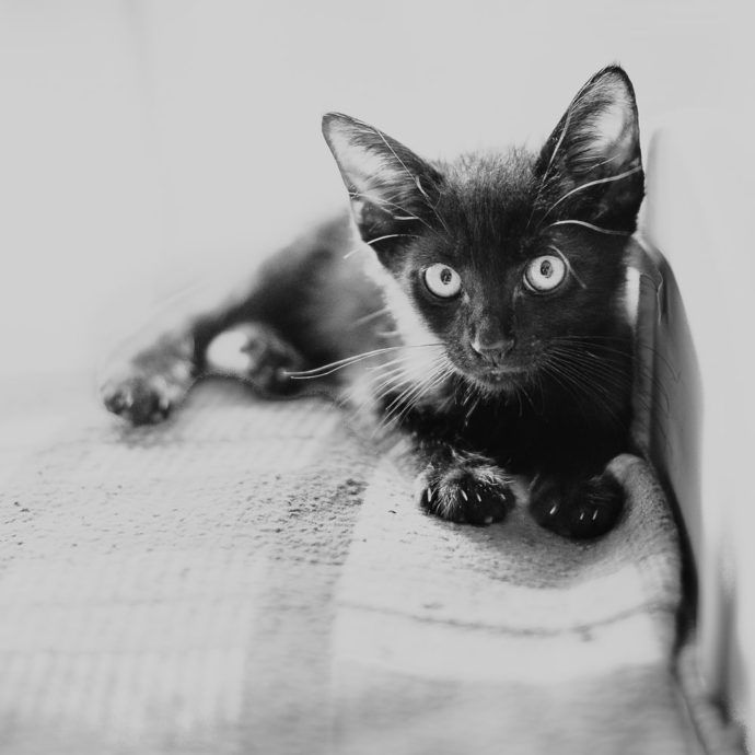 If you've ever fancied owning a black cat, if you're game enough and believe that them walking in your path brings good luck, here's your chance!