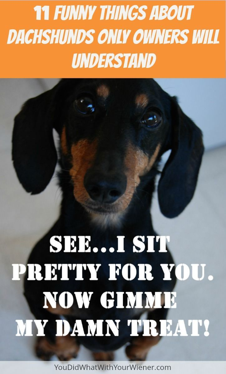 11 Funny Things About Dachshunds Only Owners Will Understand