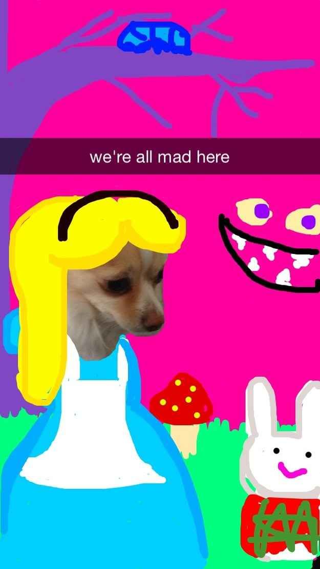 Alice in Wonderland | These Snapchats Of A Dog Turned Into Disney Princesses Are Fantastic