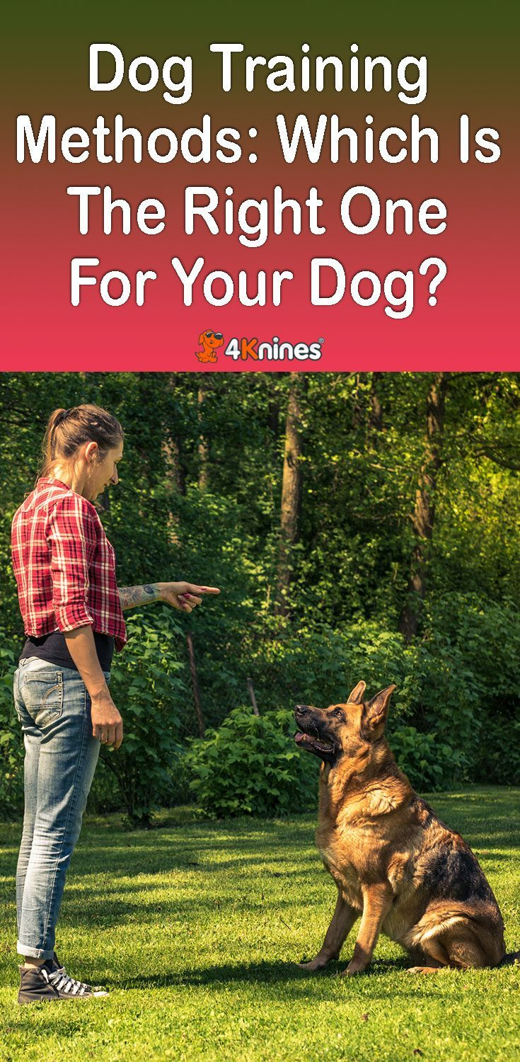 Dog Training Methods Which Is The Right One For Your Dog Dog
