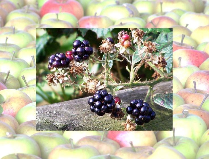 Calendar pix - October 2013 Blackberry and apple pie time!