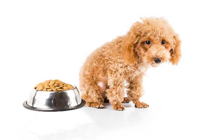 Natural Remedy Dog Upset Stomach