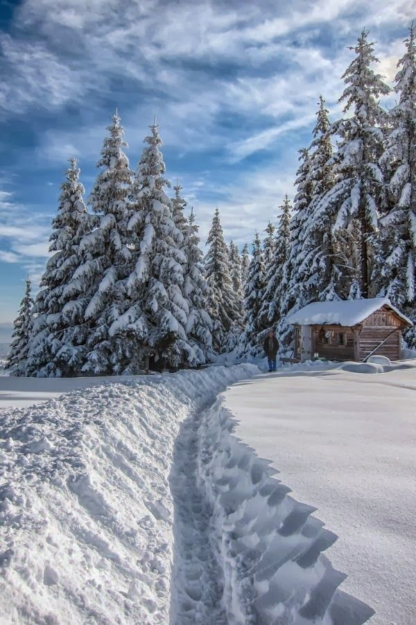 Path to the log cabin #winter