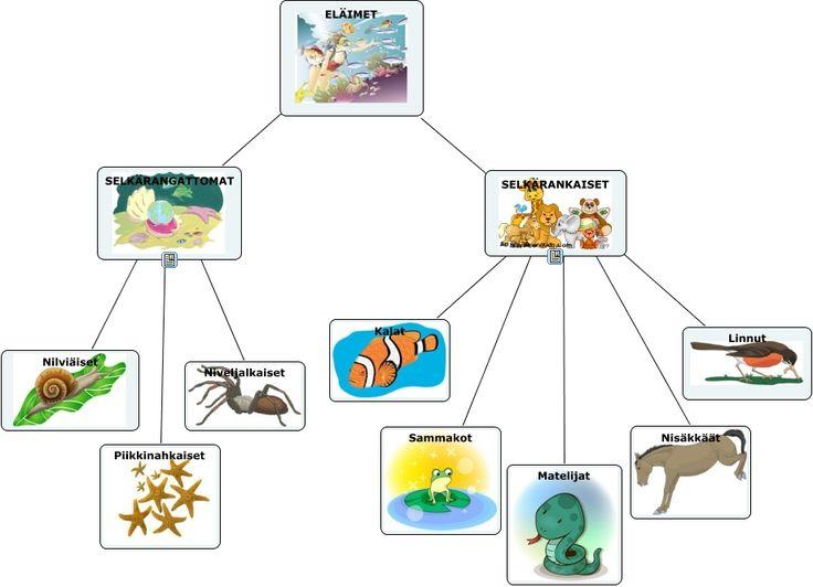 Eläinten pääryhmät - Käsitekartta