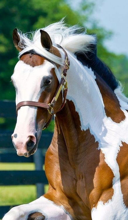 Such a beautiful paint horse!