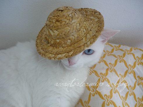 Perla cappello