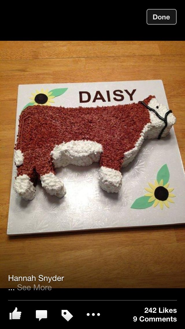 Cow cake                                                                                                                                                                                 More