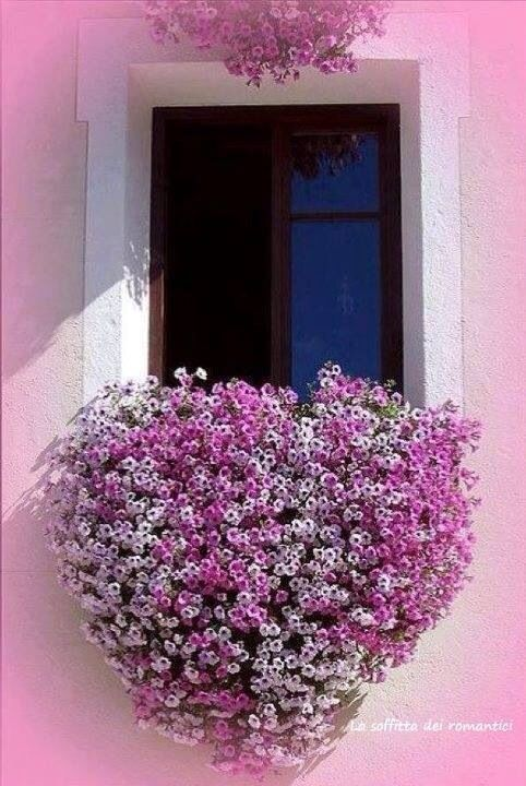 Lovely pink outdoor
