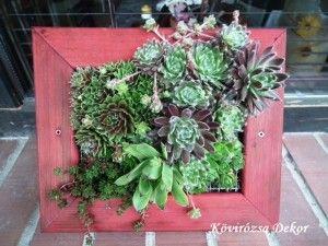 succulent living picture, kövirózsás élőkép| Kövirózsa Dekor