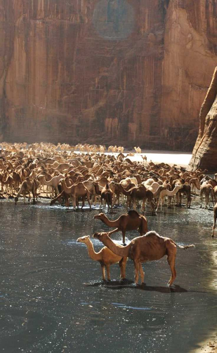 Guelta de Archei, a camel paradise in North-eastern Chad http://whenonearth.net/stop-guelta-darchei-saharas-famous-water-source/