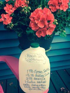 Geranium Lovers! This is the BEST fertilizer for your plants!