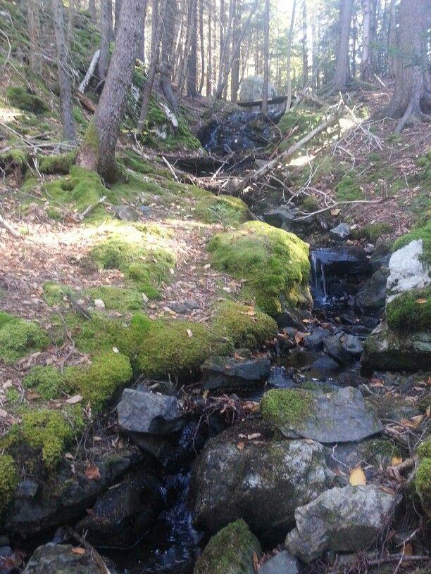 Harrigan Lake Falls, small falls in Rockwood Park,  Saint John, NB