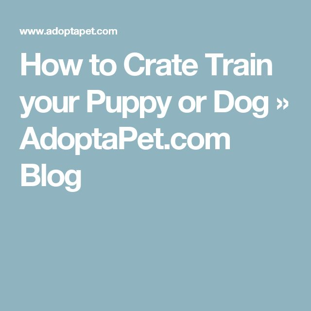 How to Crate Train your Puppy or Dog » AdoptaPet.com Blog