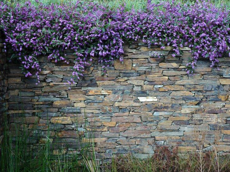Eco Outdoor Badger dry stone walling with cascade planting. Eckersley Garden Architecture | Eco Outdoor | livelifeoutdoors | Outdoor design | Natural stone walling and flooring | Garden design | Outdoor paving | Outdoor design inspiration | Outdoor style | Outdoor ideas | Garden ideas | Retaining wall | Stone veneer | Stone walling | Stone cladding | Luxury homes   Outdoor tiles | Outdoor luxury |Floor tiles | Outdoor tiles | Pool ideas | Water features