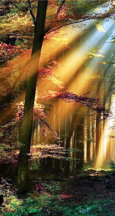 Rays of Hope in the forest ♥