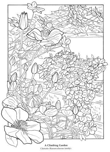 Flower Garden Coloring Book The 1181 Best Images About Adult Colouring Flowers