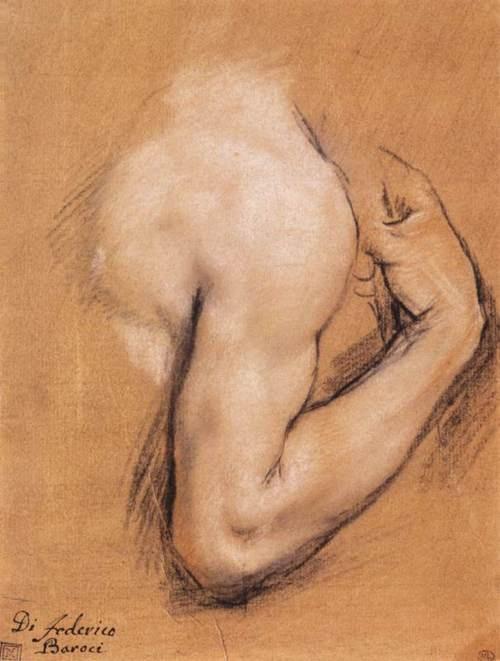 Federico Fiori Barocci , Study of a Bent Right Arm (c. 1590). Pastel on chamois paper, 232 x 176mm. Musée du Louvre, Paris.