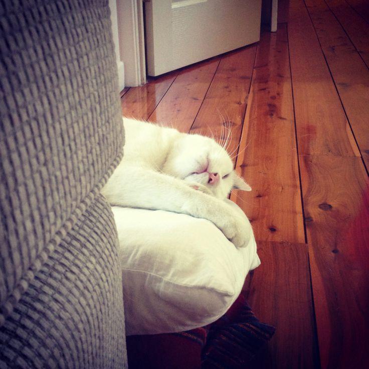 Sleeping cat #cats