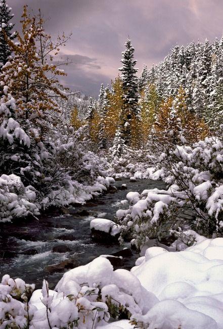 Winter wilderness, Banff National Park ~ Alberta, Canada (photo by Paul Birnie, Calgary, Canada)....