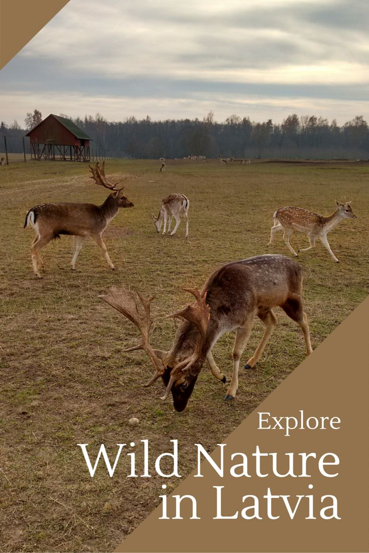 Latvia is one of the few places in Europe that still has wild nature. If you want to explore the wild outdoors, Latvia might be the right destination!