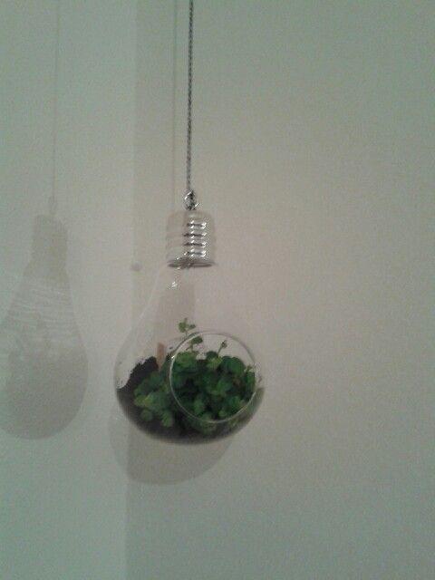 Ampoule en suspension ! Le vert et le verre on ne s en lasse pas !