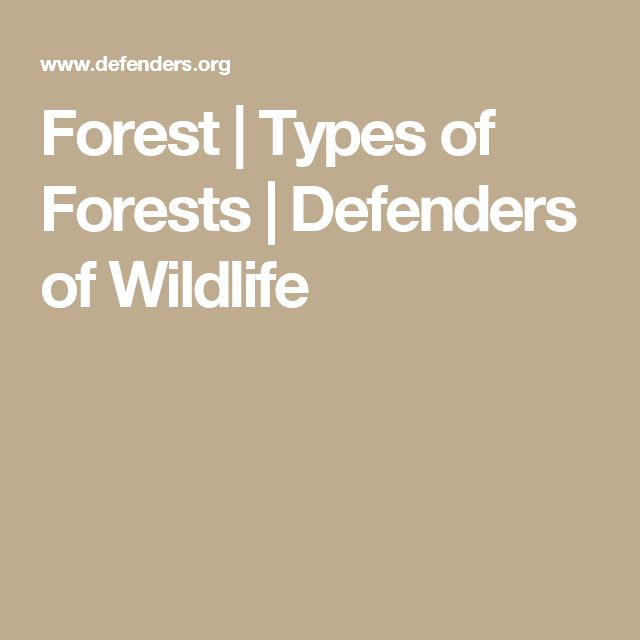 Forest | Types of Forests | Defenders of Wildlife