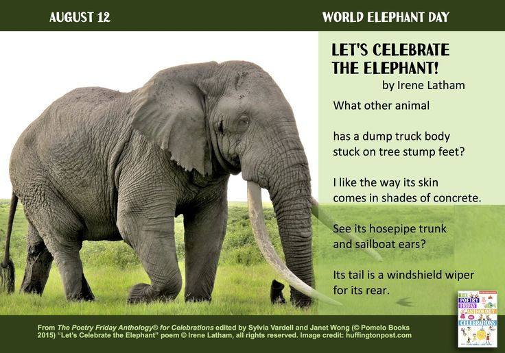 """""""Let's Celebrate the Elephant!"""" with this poem by Irene Latham  from THE POETRY FRIDAY ANTHOLOGY® FOR CELEBRATIONS edited by Sylvia Vardell and Janet Wong (Pomelo Books, 2015)"""