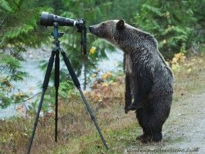 Grizzly bear photo is a prized trophy - GrindTV.com I love this picture...It almost looks like the bear is smiling!