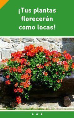 ¡Solo una cucharada de este ingrediente puede hacer que tus plantas florezcan como locas! #abono #fertilizante #florecer #flores #plantes #interiores