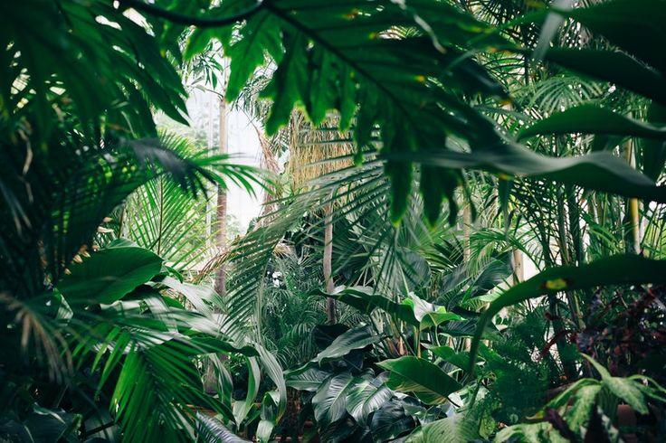 Op zoek naar een nieuwe schaduwplant? Wij schreven er een blog over? http://lnk.al/4Qwk