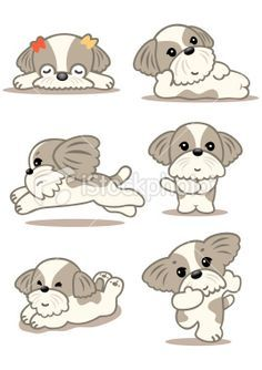 how to draw a shih tzu wikihow