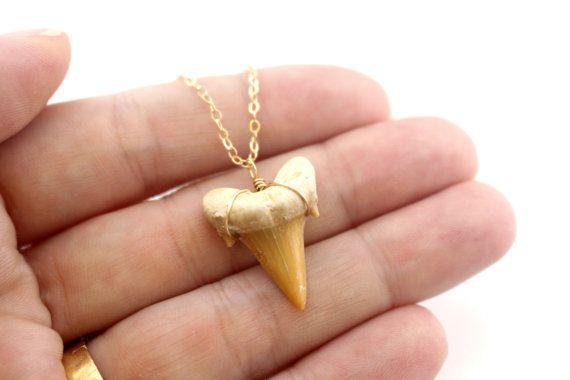 Versteinerte Hai Zahn Gold Shark Tooth Kette Fossil von FiveOfMine