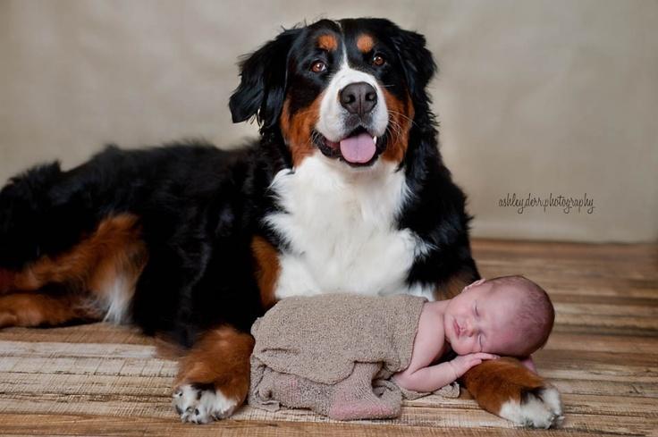 Ashley Derr Photography www.ashleyderrphotography.com    newborn and dog