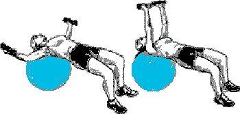 exercice haltères avec ballon de gym